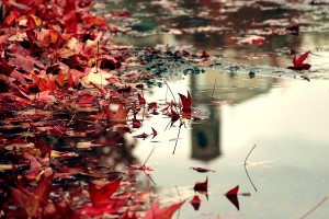 November_Six_by_In_Loving_Memory
